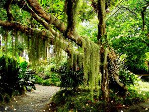 Honolulu Hawaii Botanical Garden
